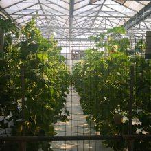 建一个玻璃无土栽培温室需要投资多少钱/玻璃无土栽培温室生产商