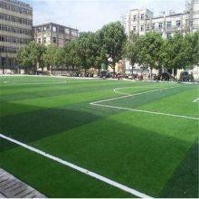 1.5cm工程围挡草坪 庭院绿化专用草 幼儿园运动场草皮网