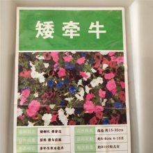 优质新采摘草花种子 矮牵牛种子 发芽率高 价格便宜 批发价