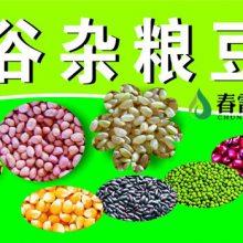 新乡现磨豆浆小料包-东旭粮油品牌保障-现磨豆浆小料包多少钱