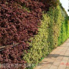 山东立体绿化工程公司为您打造户外立体绿化设计,墙体绿化植物供应