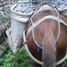 鹤壁骡马运输-铜陵爱年骡马运输-骡马运输队电话