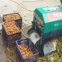 销售山核桃脱壳机价格 内蒙热销大型坚果剥壳机 高产量核桃去皮机