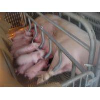 现代自动化养猪设备【母猪产床】【母猪分娩床】【养猪设备】厂家直销【昌荣】品牌产品