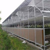 黑龙江阳光板跟玻璃温室比较有什么优势方面 保温性好 盛鸿专业生产制造