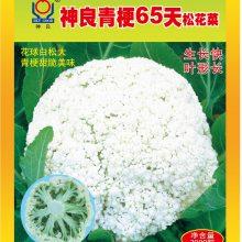 【神良种业】神良青梗65天松花菜 松花菜种子 蔬菜种子