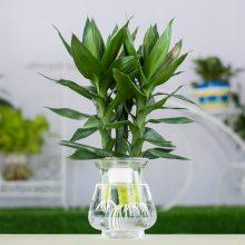 武汉阳台绿植定制花园设计铁艺风格,北欧风格花卉盆栽私人设计