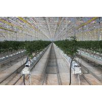 温室大棚种植用西红柿挂钩10米线超防腐热镀锌吊蔓钩