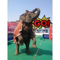 全国承接大象表演 皇家马戏团巡演接单