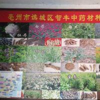 亳州市谯城区智丰中药材种植专业合作社