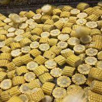 高效即食玉米切头去尾机 顺泽机械***
