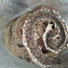 正品蕲蛇哪里购买 蕲蛇的药用价值蕲蛇批发价格
