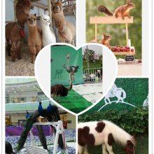 福建哪里有马戏团,羊驼,孔雀,矮马,大象,骆驼萌宠动物租赁展览电话
