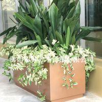 厂家定做直销 不锈钢花盆 长方形花箱 钛金花盆
