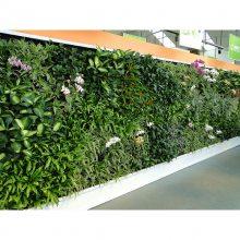 广州植物墙仿真苔藓绿色假苔藓青苔厂家批发仿真植物墙门头装饰人造假草皮