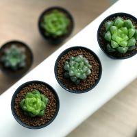 MMH多肉植物玉露新手套餐多肉组合盆栽绿植含盆含土种好发货包邮