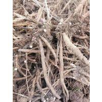 芍药的抗旱能力怎么样 白芍套种 生长速度快 包种植技术