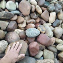 厂家批发河北永顺承托层用鹅卵石 园林景观鹅卵石