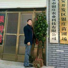 泰安市银庄农业科技有限公司