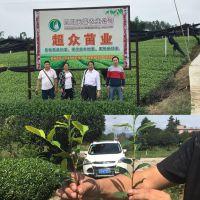 雅安市名山区超众苗木种植农民专业合作社