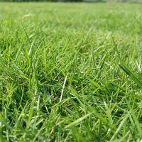 2mm工程围挡草坪 塑料庭院绿化围挡专用草 高尔夫球场果岭铺设运动场草皮围墙