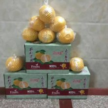 甜葡萄柚苗哪里买_台湾甜葡萄柚苗多少钱一株