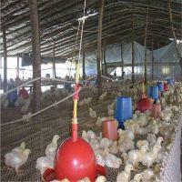 家禽养殖塑料网 塑料牵伸网 全新料养殖塑料网