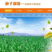 良玉188玉米种_销售_批发_零售–【沈阳市丹玉种子经销处】