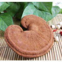 黑龙江康瑞食用椴木灵芝生产厂家
