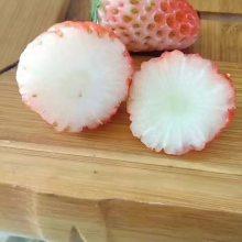 矮化红颜草莓苗价格多少钱、矮化红颜草莓苗购买多少钱