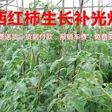 西红柿补光灯-辽宁西红柿补光灯-雏鹰植物补光灯(查看)