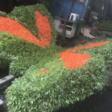 真植物造型绿雕一般选用五色草佛甲草景天等材质哦