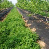 热卖平度 莱西 黄岛 青岛农业除草防草覆盖地膜农用无纺布厂OU