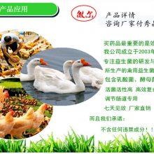 养鸡喂禽用益生菌活菌含量高的那种