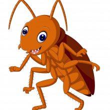 西安灭蟑螂,室外室内快速除蟑螂,安全无毒杀蟑螂