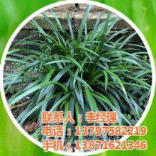 襄城区虎强绿化苗木种植专业合作社
