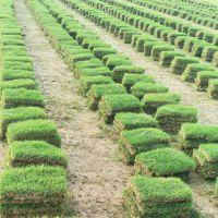 兰引3号 马尼拉草皮 福建龙岩小区园林绿化用的带泥土草皮批发价格 专车发货
