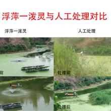 阳新县水面浮萍治理