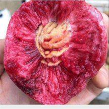 正一园艺场5公分黄金蜜桃树苗 5公分黄桃树苗哪里有卖 低价出售黄金蜜桃树苗 低价出售秋彤桃树苗一亩种