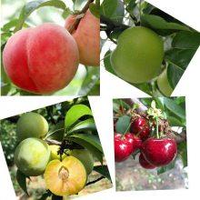 彭州市亲亲果园水果种植农民专业合作社