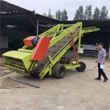 刮起青贮坑里青贮用电动取料机 润丰 自动出料取草机