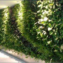 厦门城市立体绿化、垂直绿化、桥梁绿化、屋顶绿化、道路绿化、室内墙面绿化