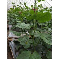 爱普达二氧化碳吸收剂光碳肥