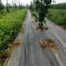 湖南2米防草布 柑橘园保湿透气渗水