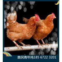 鹤壁市山城区山城惠民青年鸡养殖中心