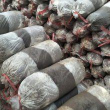 山东灵芝基地批发灵芝菌棒 灵芝菌包 灵芝出芝菌袋 产量高 易管理