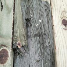 【销】上海木材供应商樟子松-樟子松亚博足彩入口信息