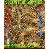 种虾 小龙虾 青虾 成品虾及养殖设备 养殖技术 水质检测