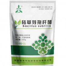 果树蔬菜中药材专用 枯草芽孢杆菌1Kg厂家直供
