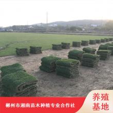 台湾马尼拉草皮_冷季型成活率高草皮_重庆篮球场草皮出售价格